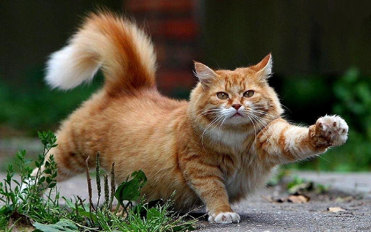 Весенними, картинки с животными красивые с надписями хорошего дня