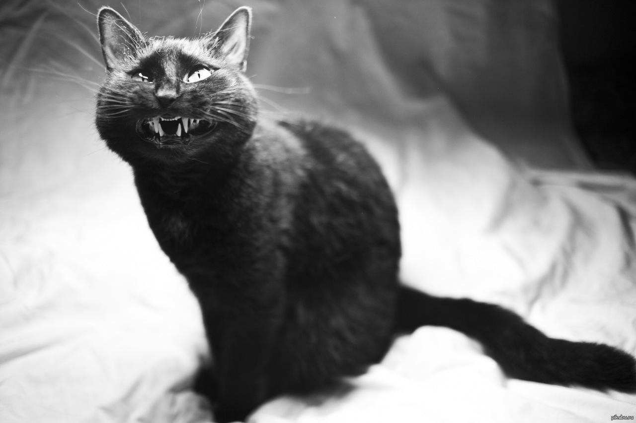 Мой первый секс с котом