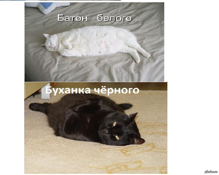 Кот и буханка