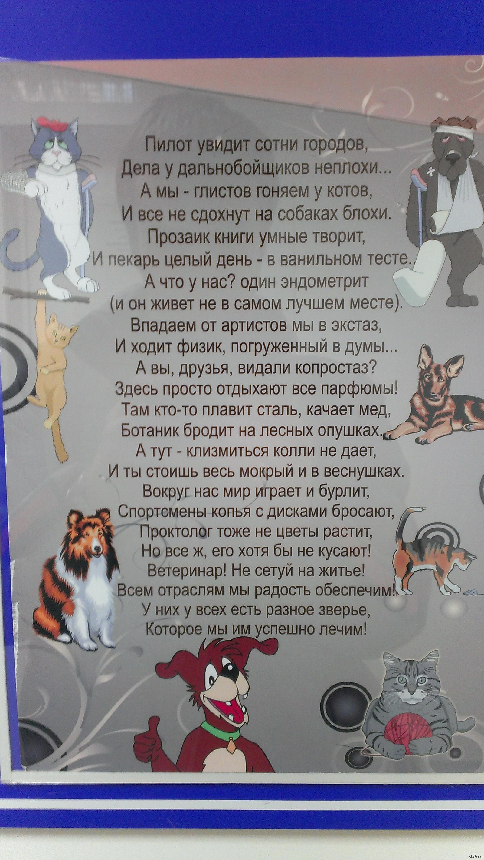 стихи про ветеринаров поздравление запрос