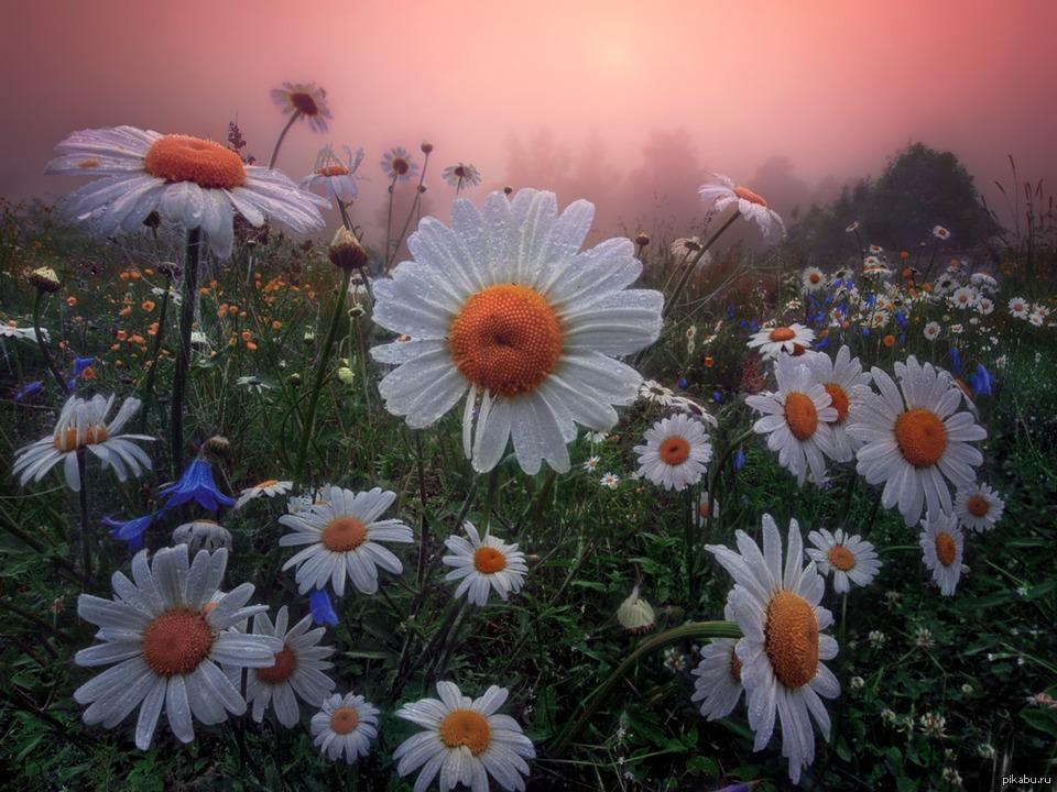 так ким фото гифка поле с полевыми цветами проводилось рабочем месте