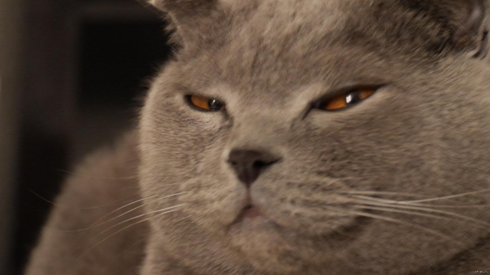 фото подозревающих котиков расстраивайтесь, если кадр