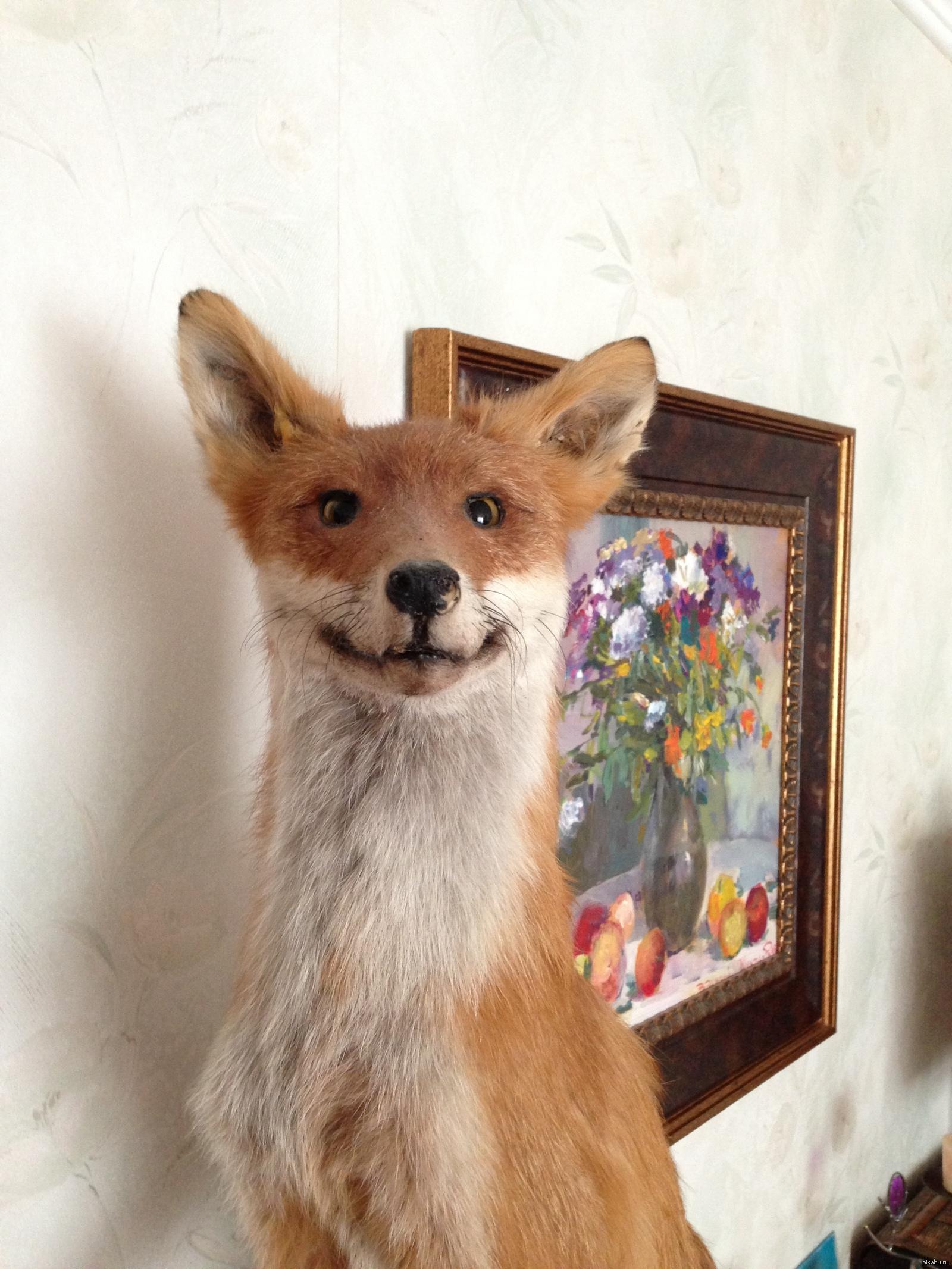 предпочитают смешные картинки с чучелом лисы куриное