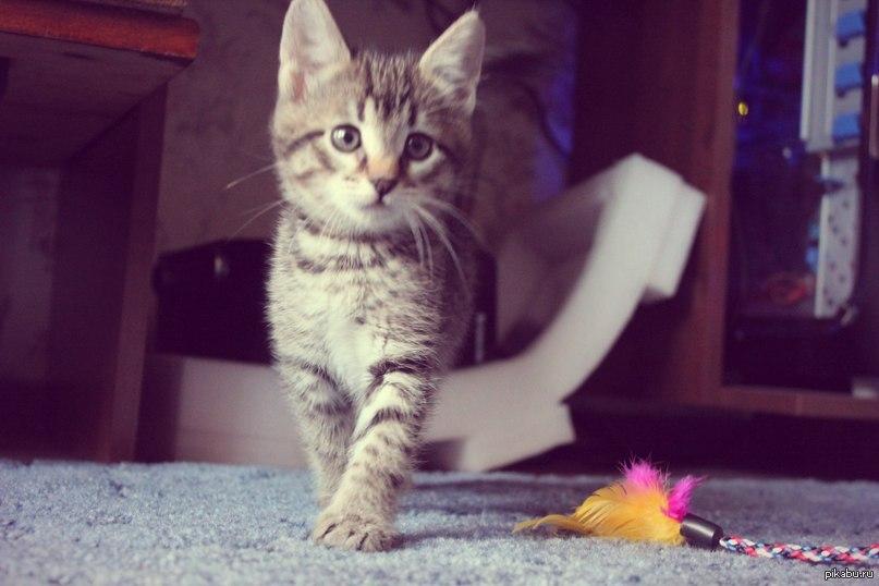 Какие кличку можно дать коту