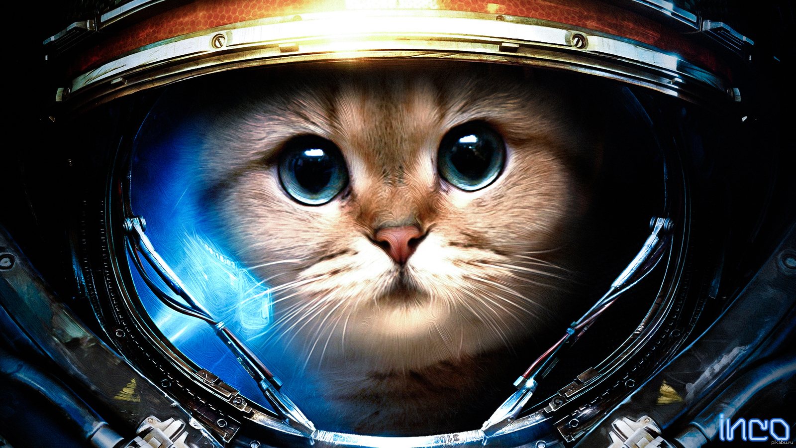 animals in space nasa - HD 1920×1080