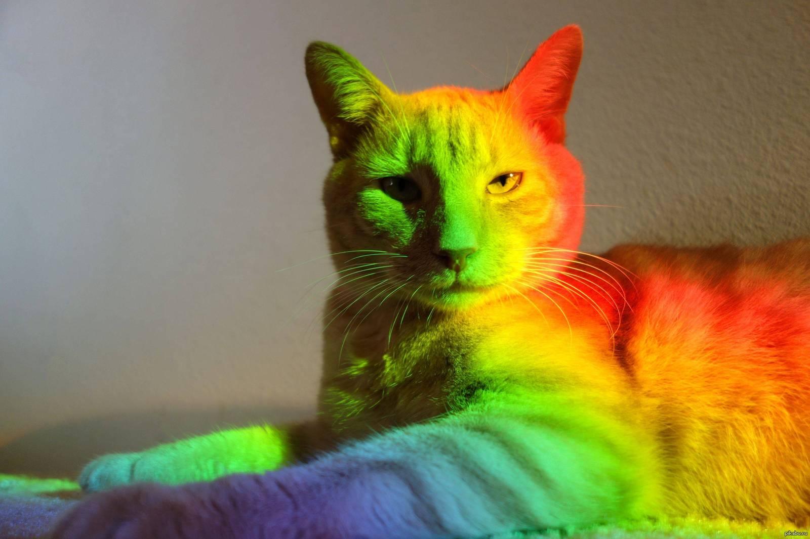 картинка разноцветные коты спасибо