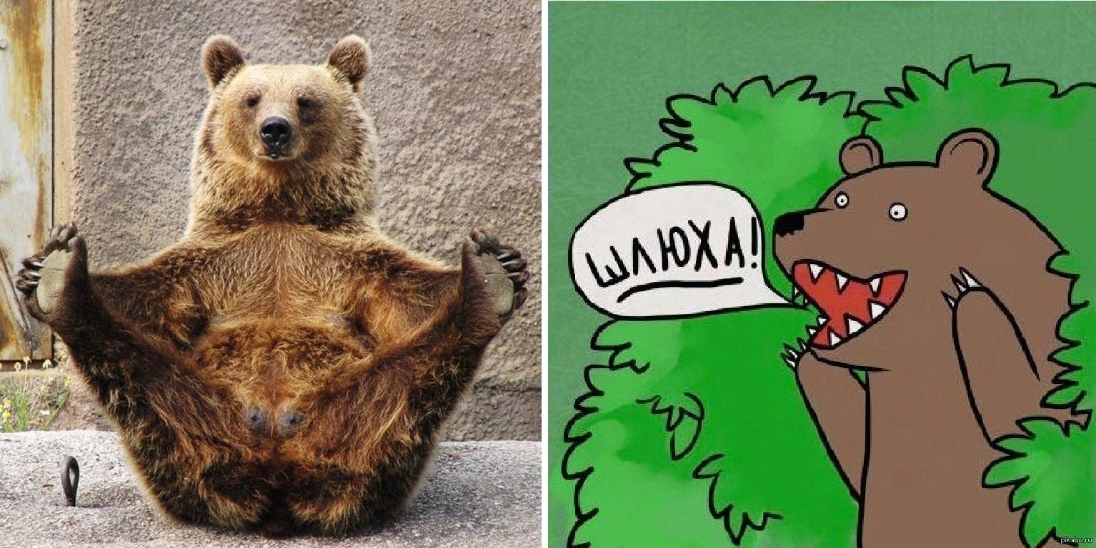 Медведем шлюхой и с картинки