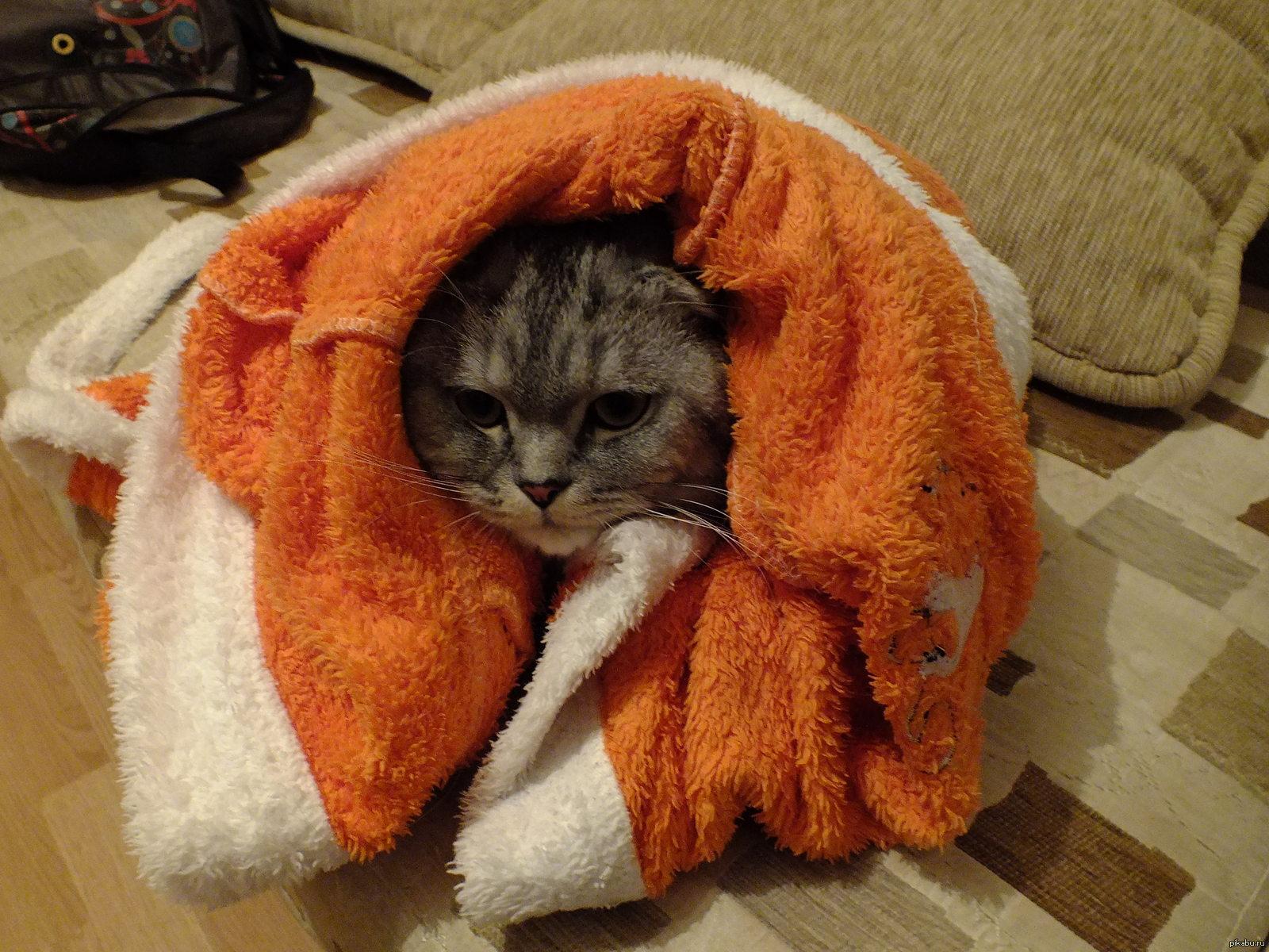 Кот замерз картинки прикольные