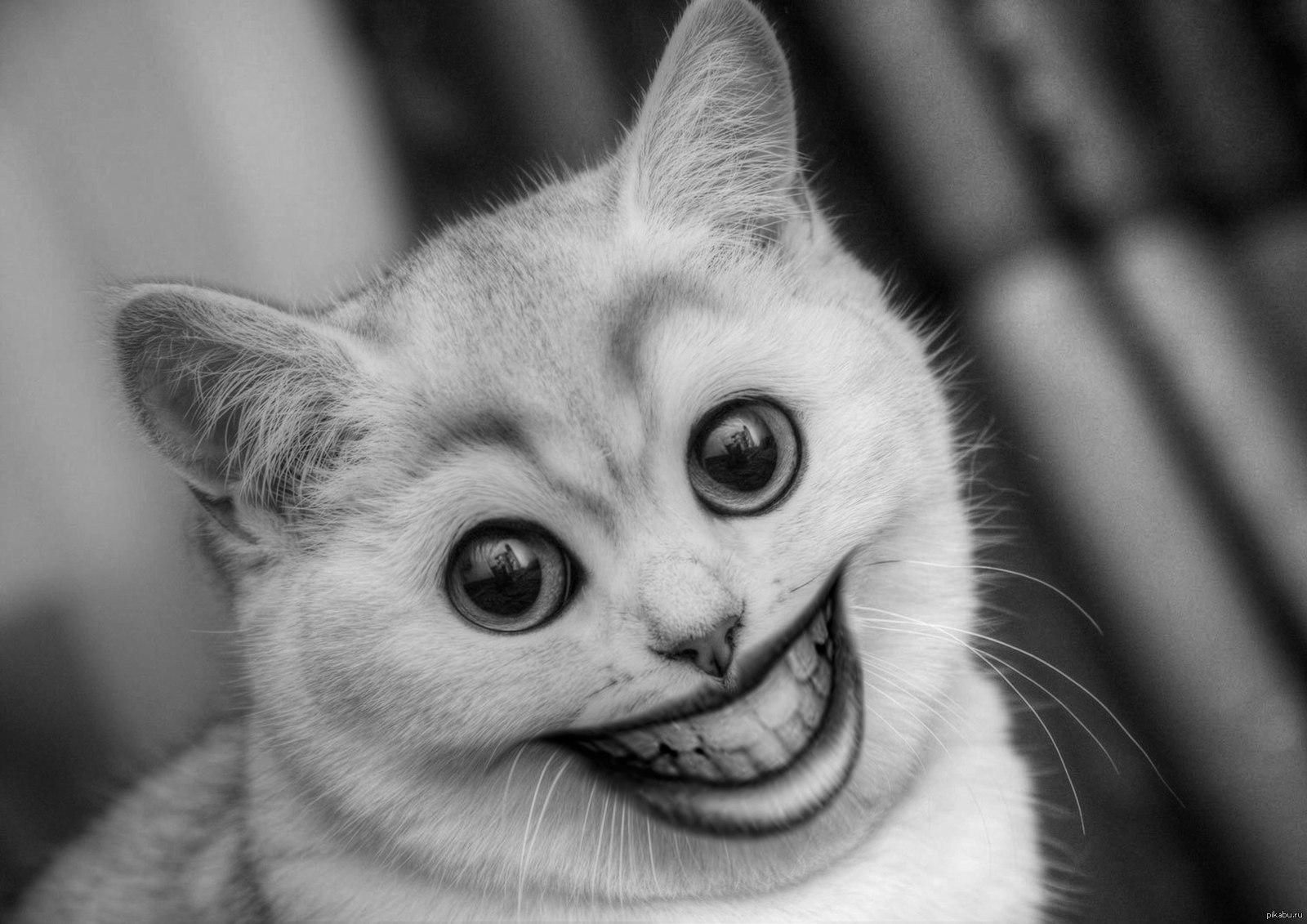 Картинках приколы, смешные картинки вк с животными