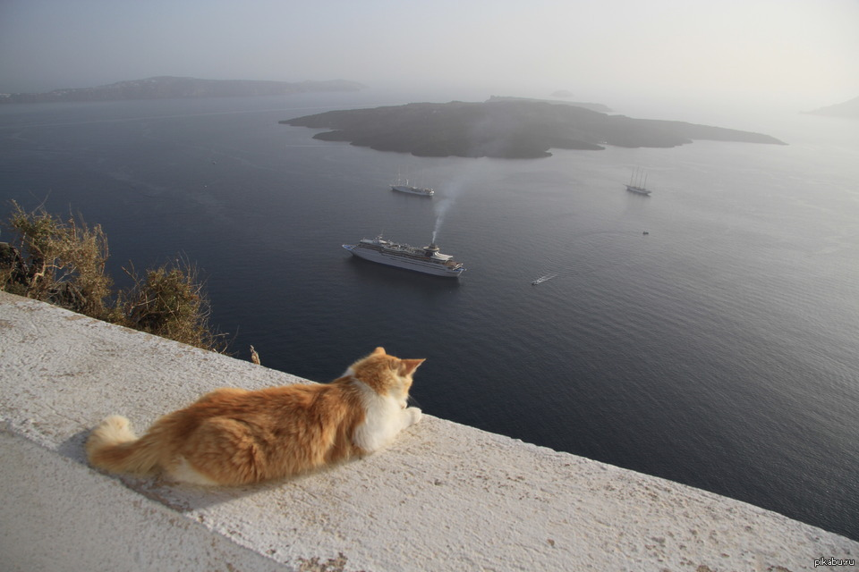 С котом в грецию