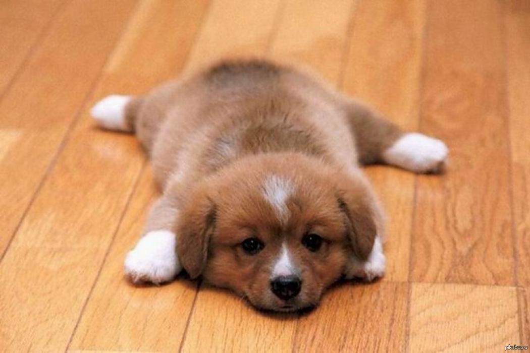 Картинки с надписью купи собаку, картинки