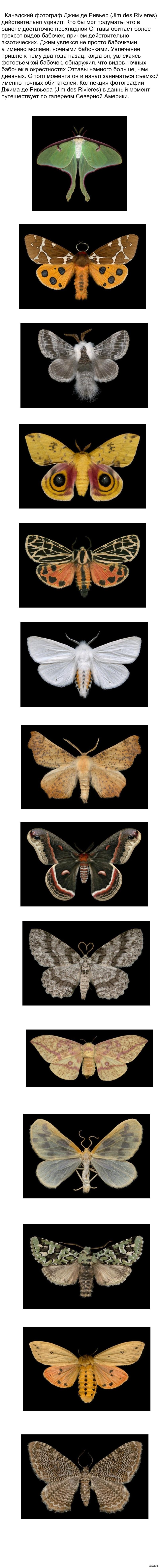 Номера ночных бабочек в чебоксарах, большим членом доводит до оргазма