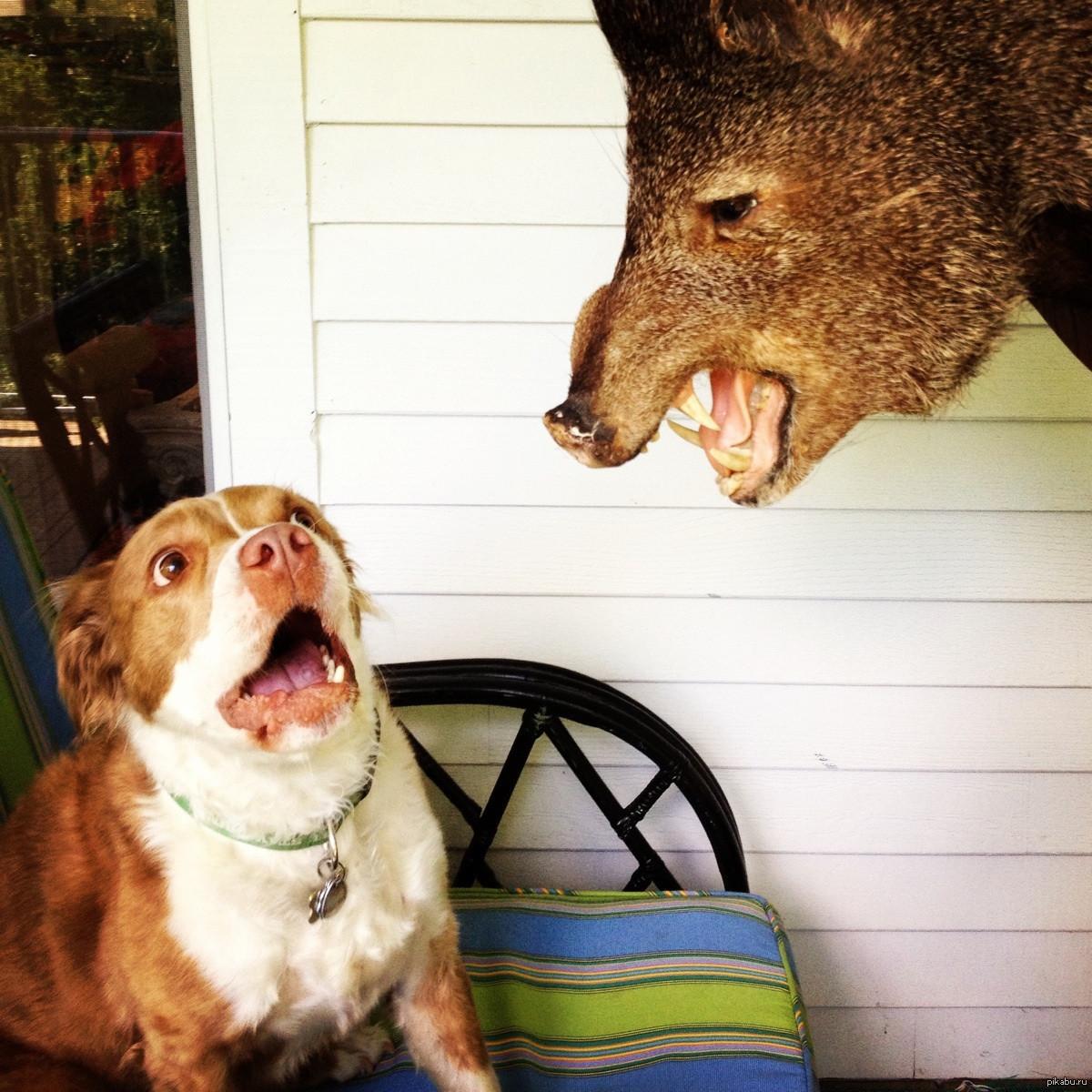 Смешные, картинки прикол про собак