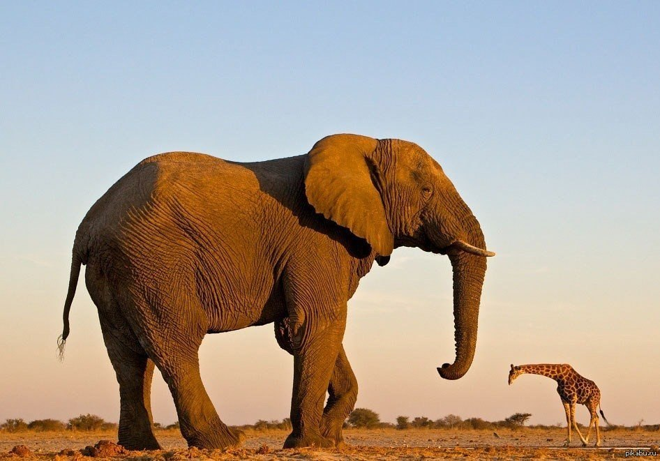 малейшее движение картинки большие животные маленькие люди в мире сопровождаем