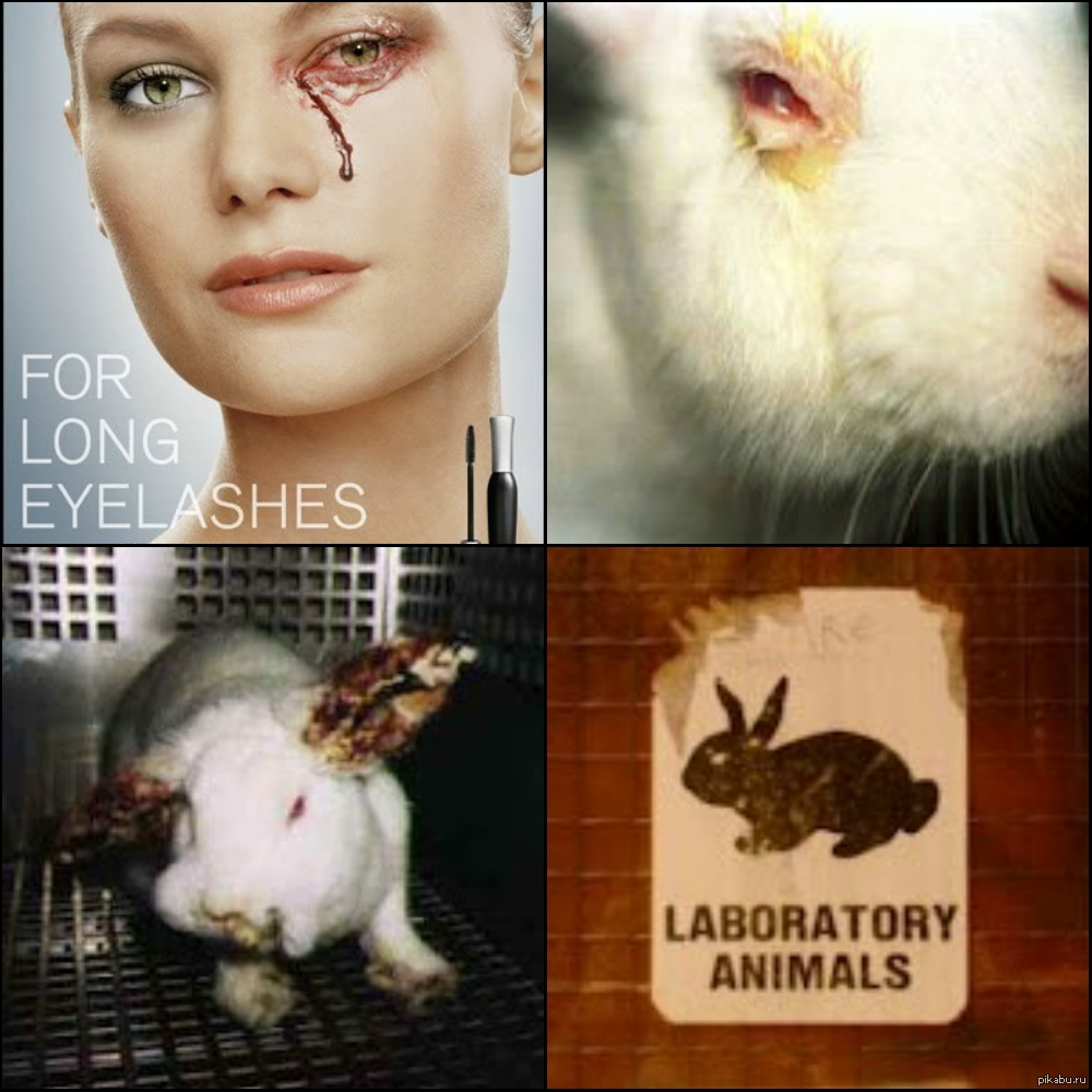 animal testing of products can save lives