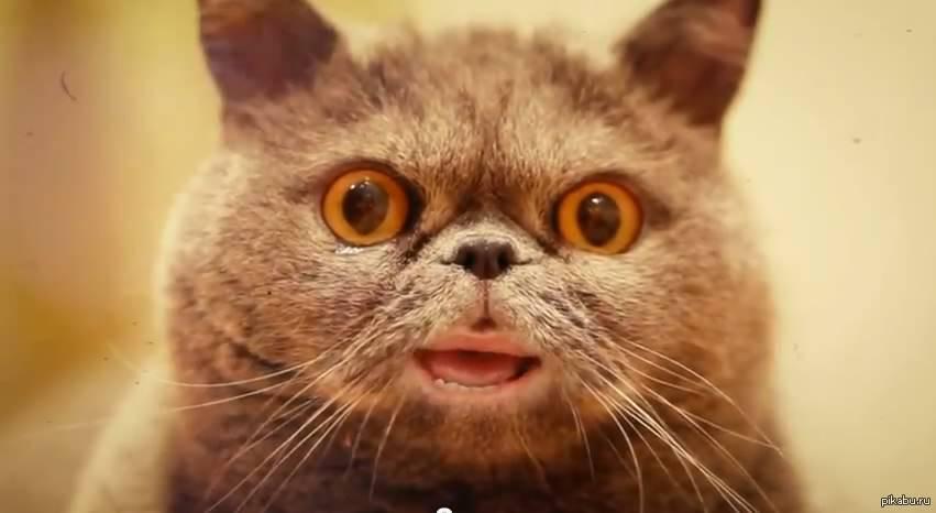 Поющие коты с человеческим ртом