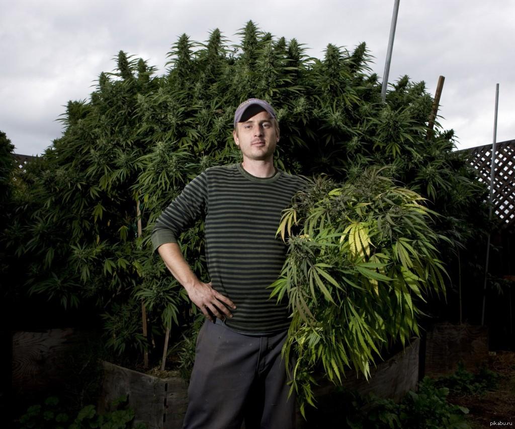 Фото парень и марихуана медальон конопля