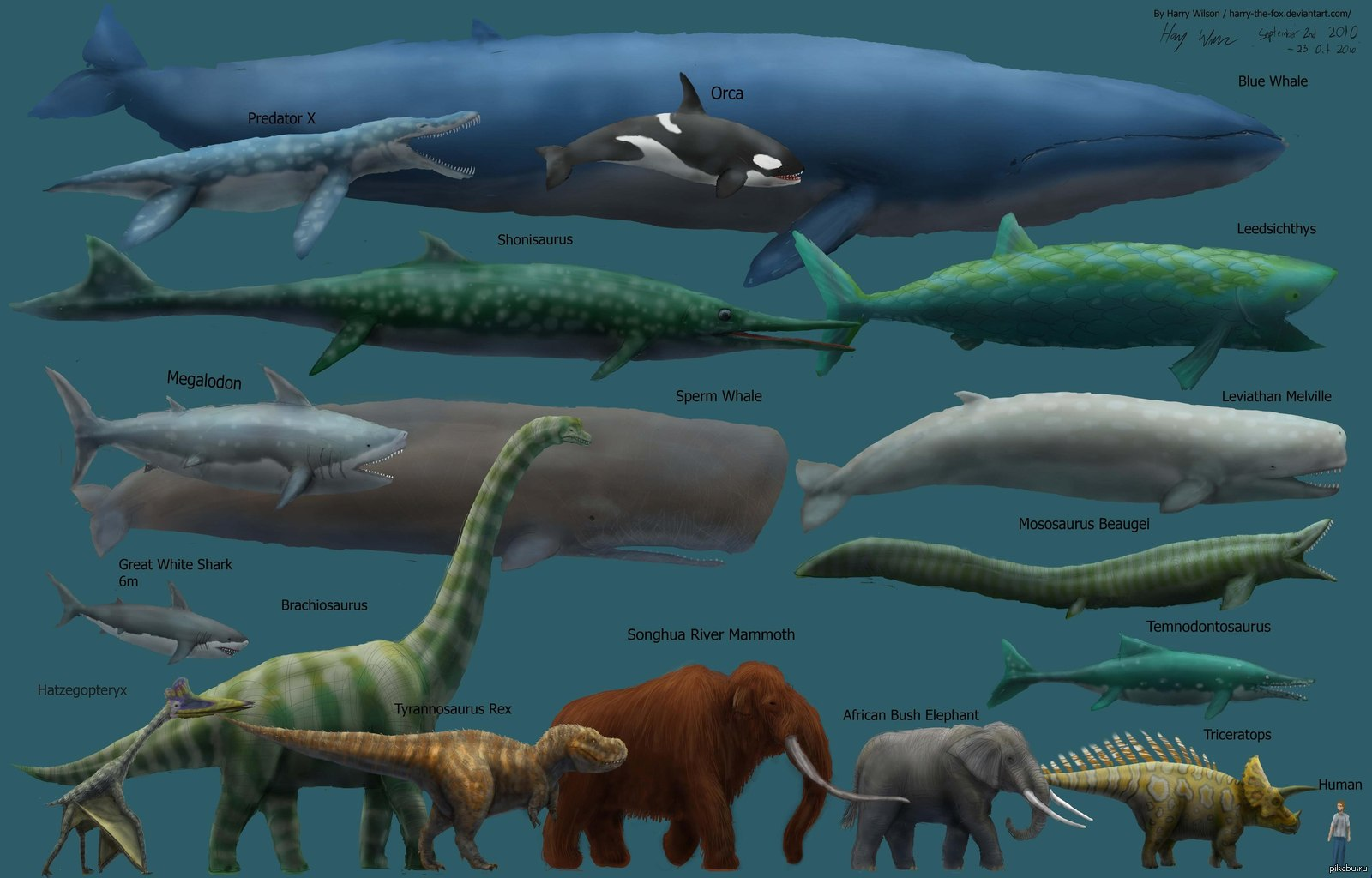 blue whale size - HD1500×992