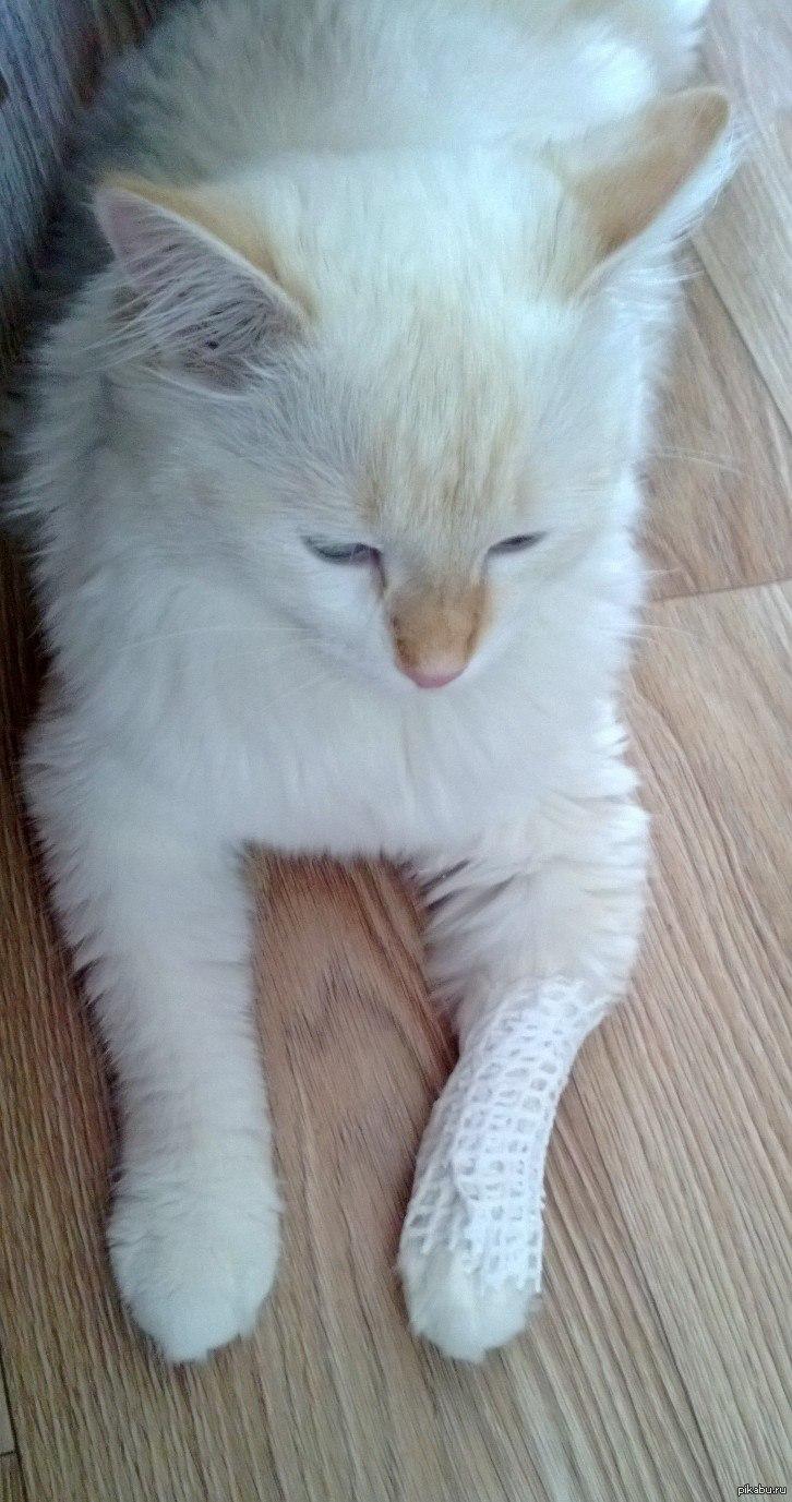Кот отбил лапы