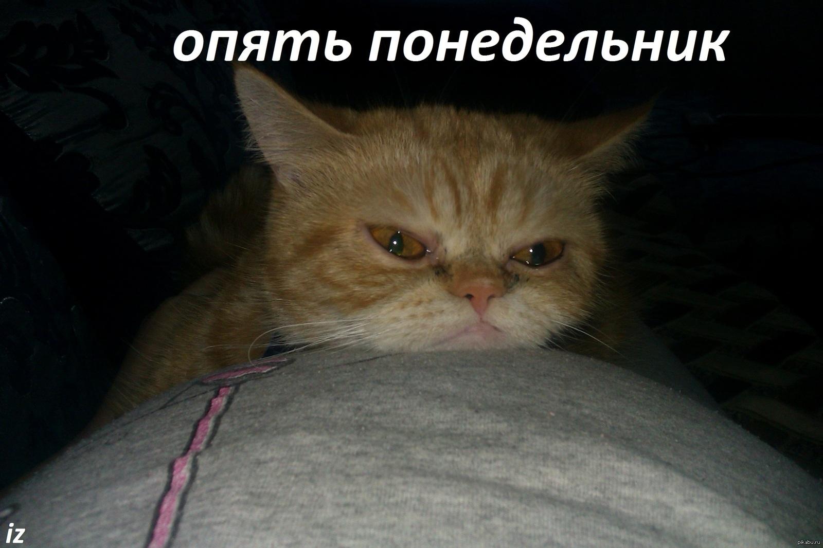 надо принести фото коты и понедельник должны