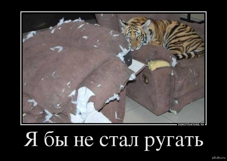 Демотиватор я и тигр