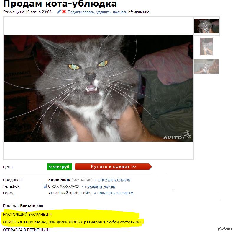 Коты купить объявления