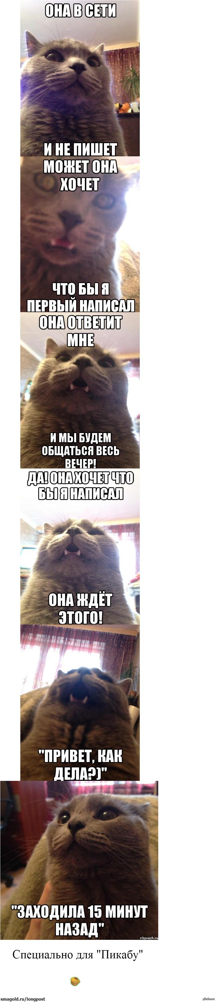 Кот пишет текст
