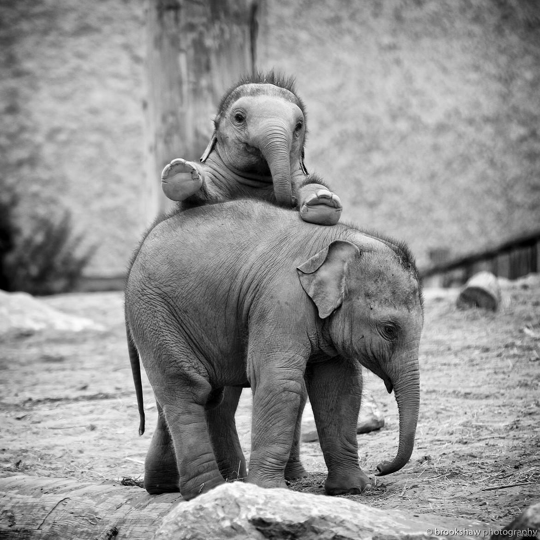 тофусов, добрые слоны картинка прическа позволит