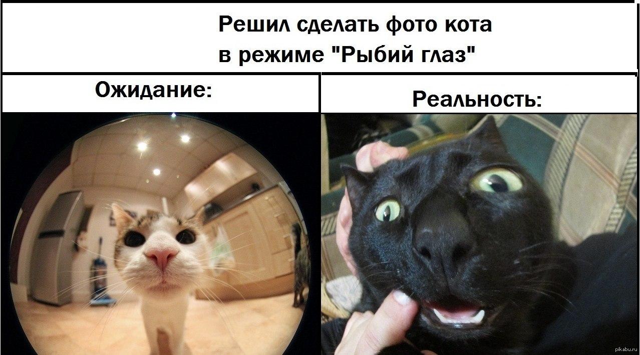 Прикольные картинки ожидание и реальность, котята надписями онлайн