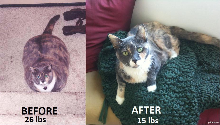 Кошка Сильно Похудела Но Ест Хорошо. Почему кошка худеет без видимых причин