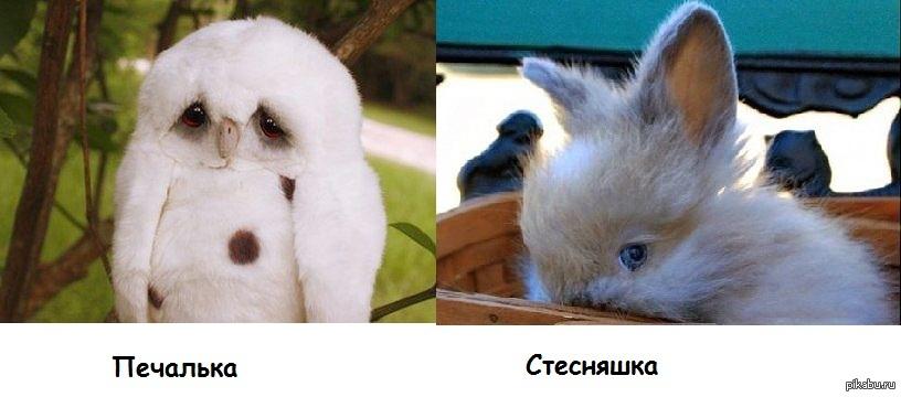 https://cs.pikabu.ru/post_img/big/2013/08/23/6/1377241654_1787592728.jpg
