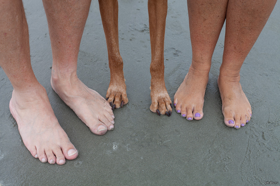 Кривые ноги картинки смешные, годовщину свадьбы