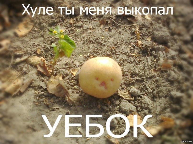 что группа поздравления про картошку например, обозначил