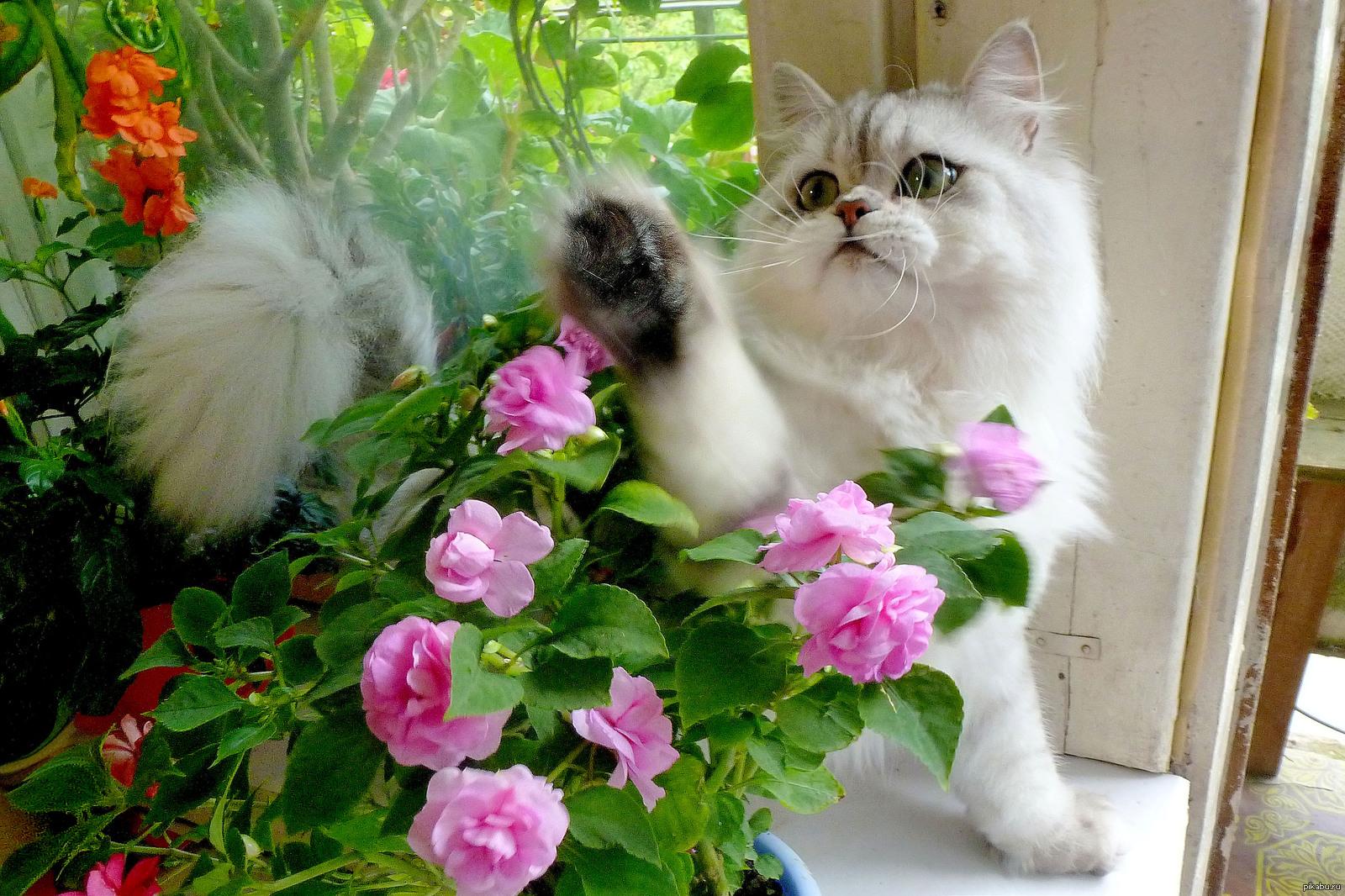 Вербное, картинки красивые и прикольные цветы