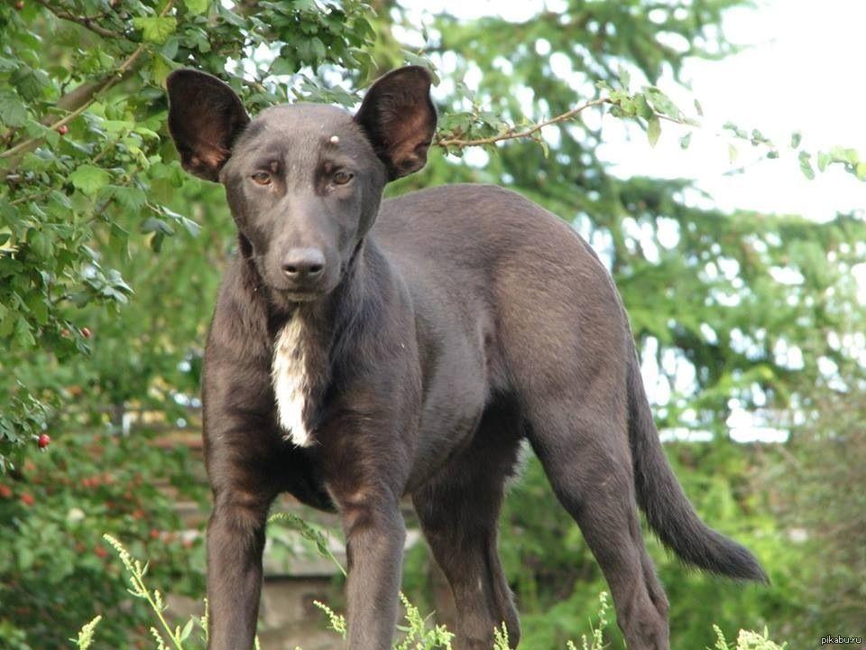 Породы собак маленьких размеров с фото, названиями и ...