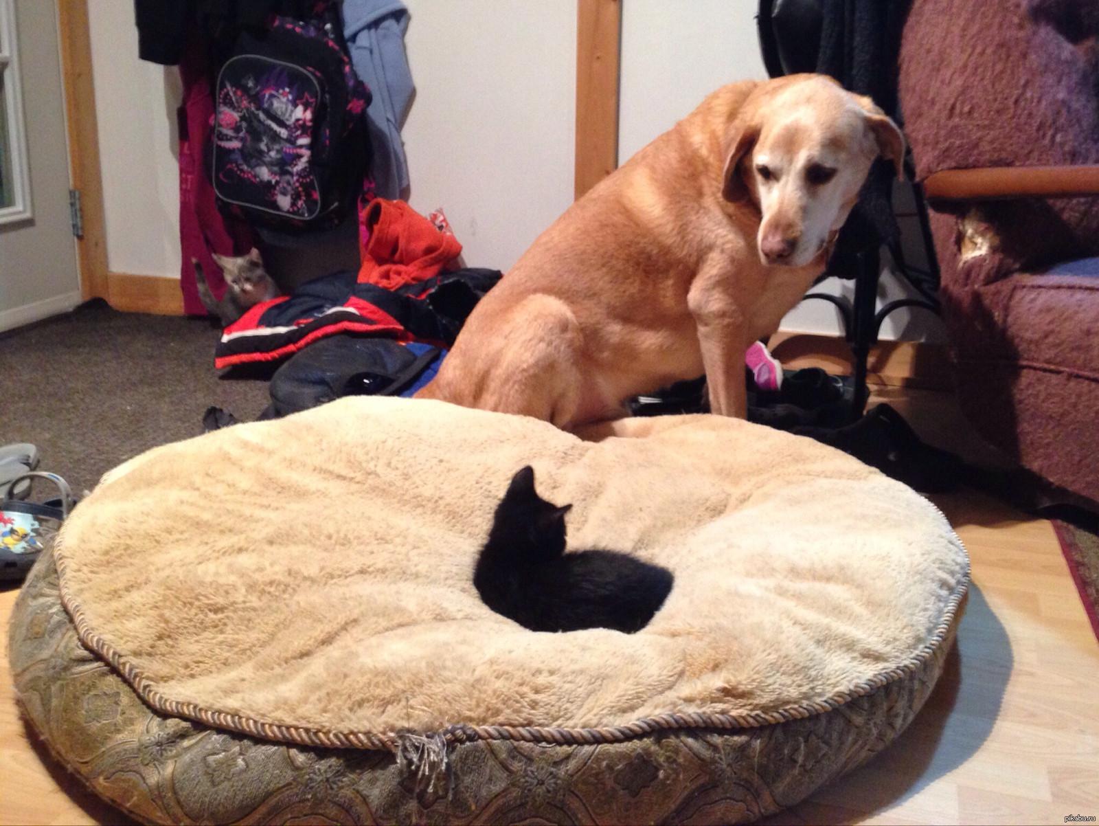 самые смешные коты и собаки приколы продажу выставлен