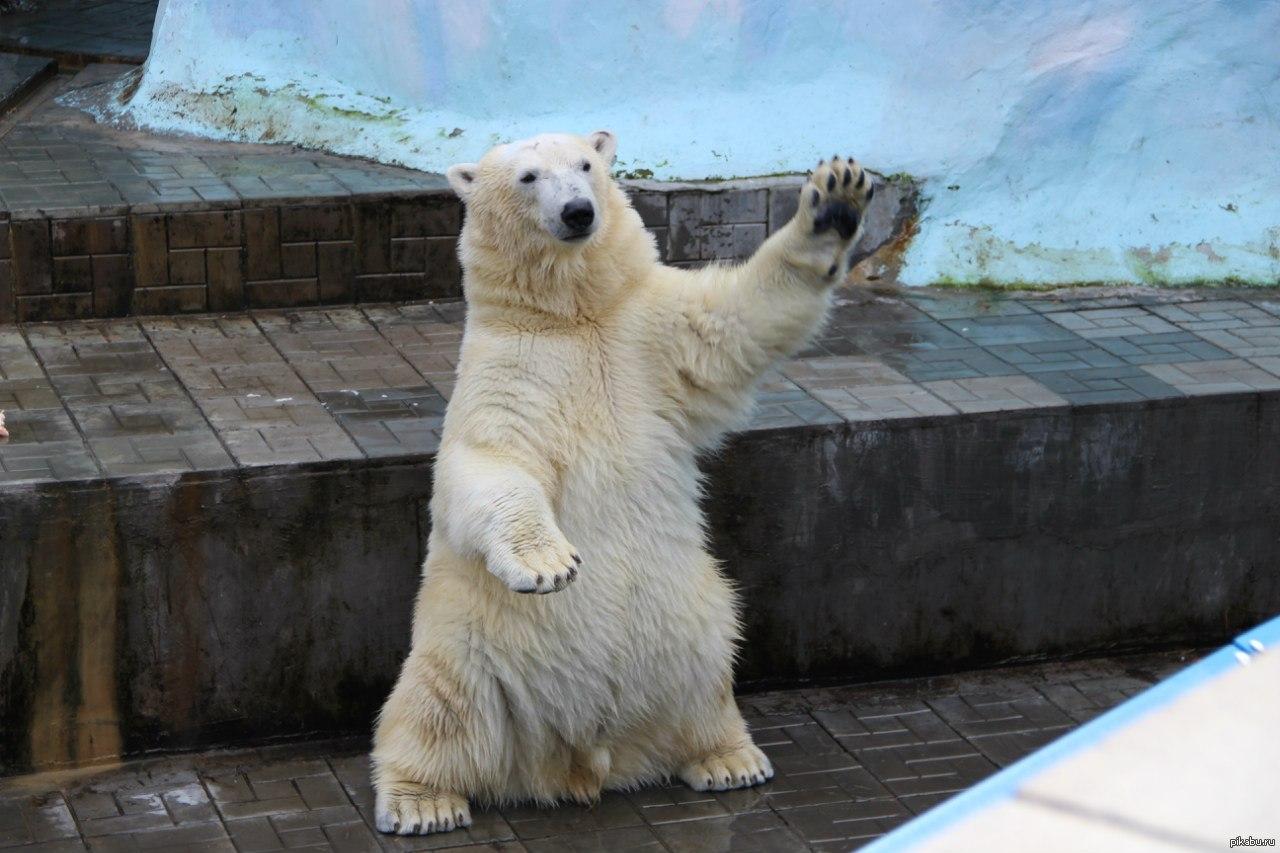 каждый медвежата картинки привет одной версий это