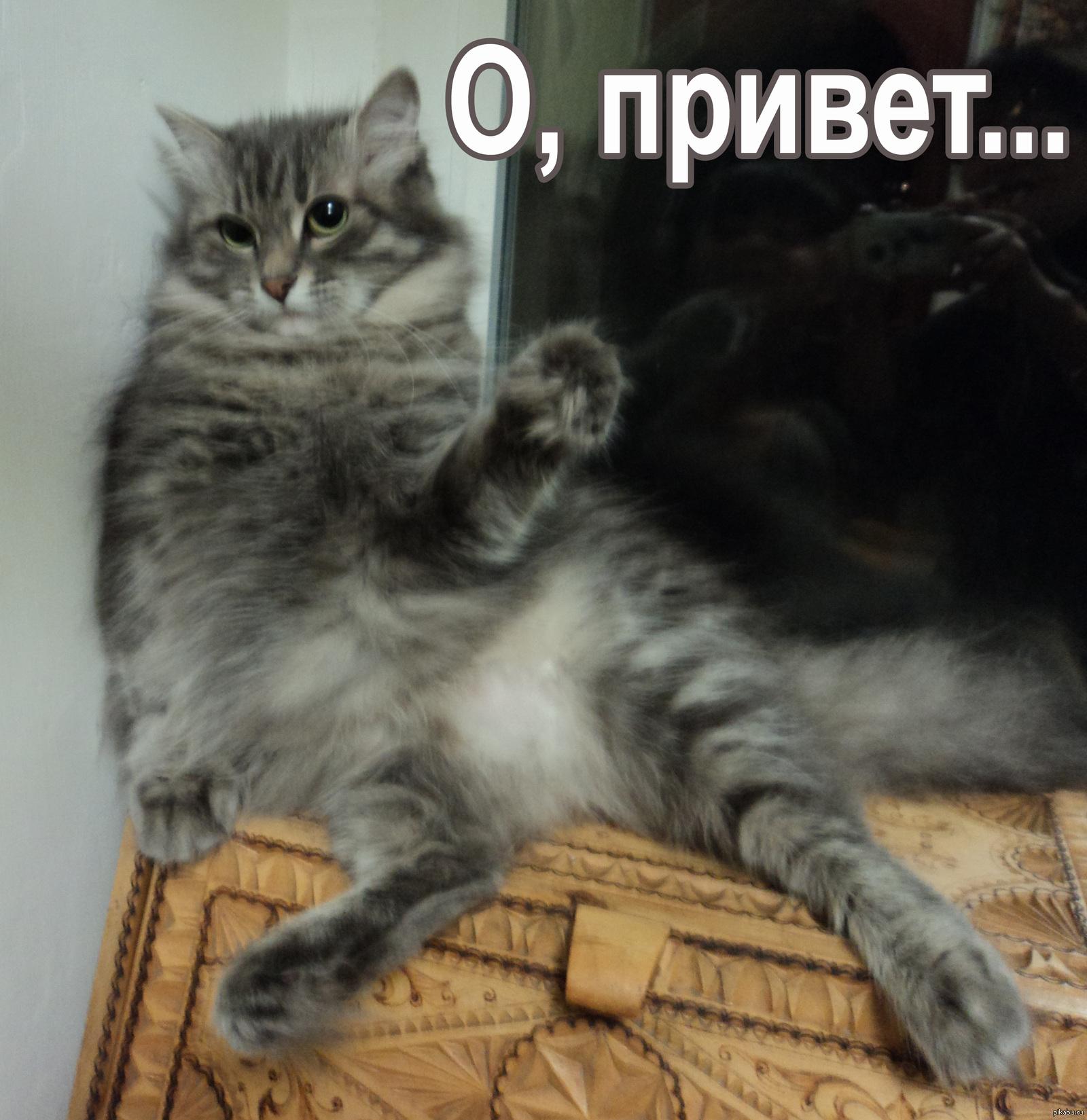 нас кошки картинки с надписью привет драгоценное место, автосервиса