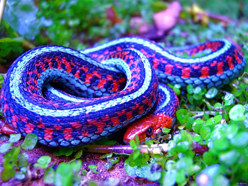 картинки самых редких змей