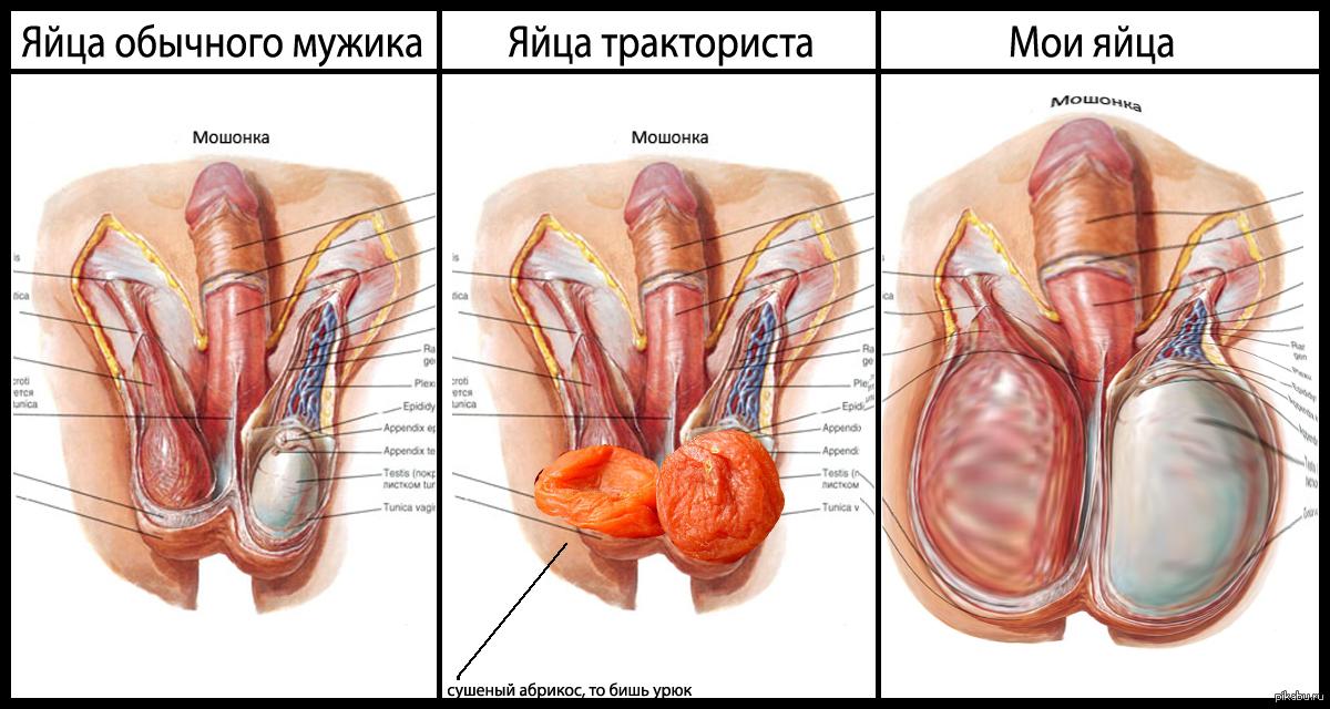игры с мужскими яйцами спермы забрызгали
