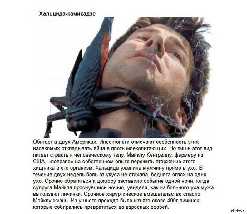 создатель костариканская хальцида камикадзе фото сообщают источники окружении