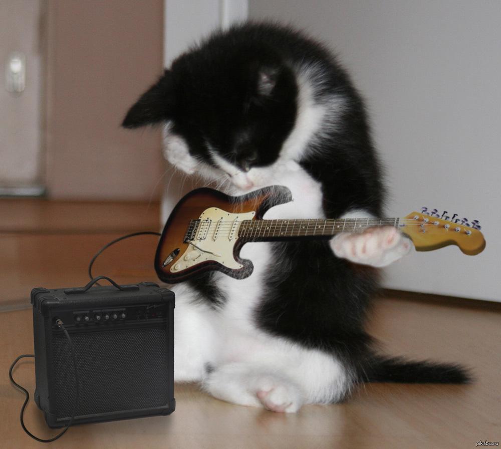 С днем рождения кот с гитарой картинки
