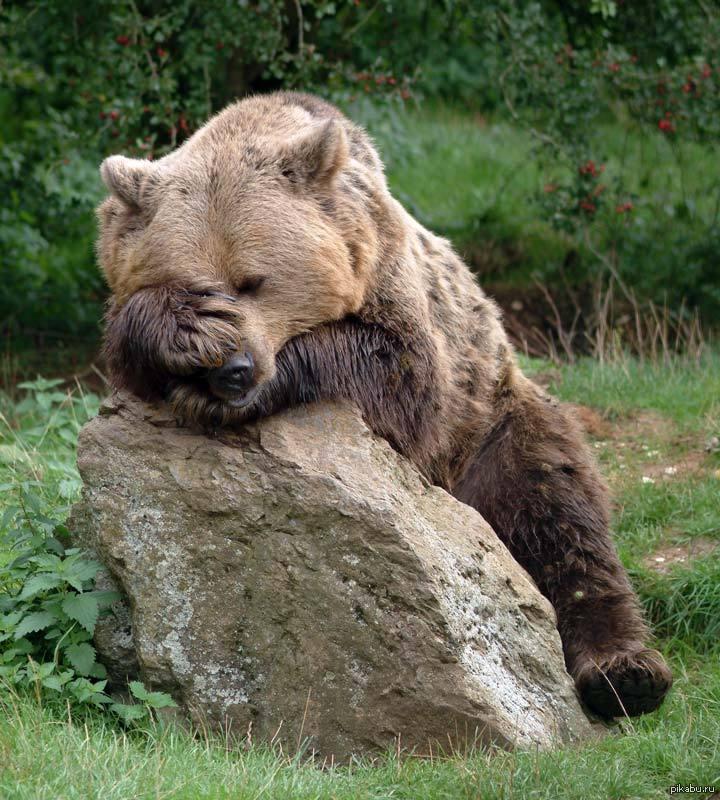 одно смешные фото с медведями фотографии публикуют только