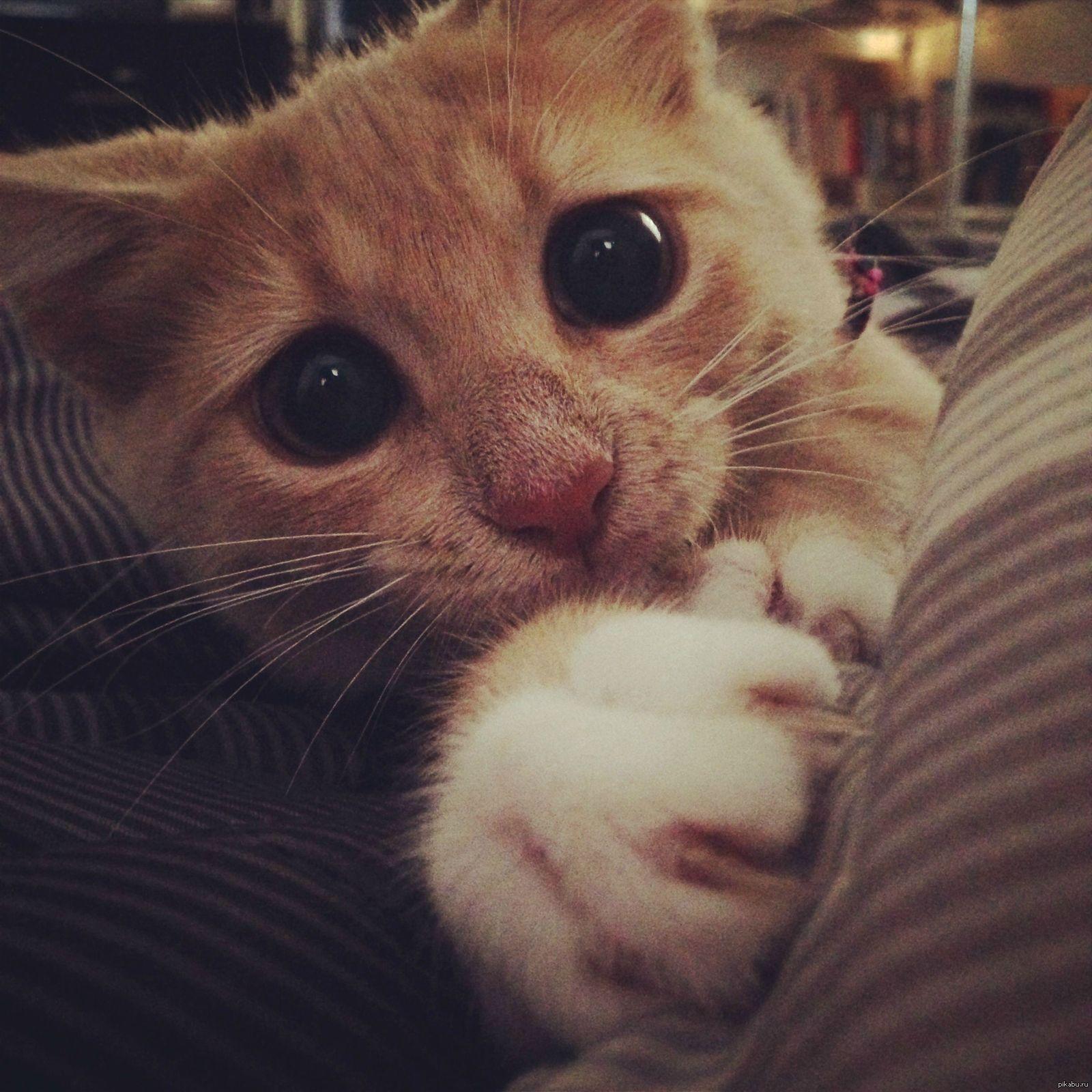есть картинки с умоляющими котиками сосны выглядят