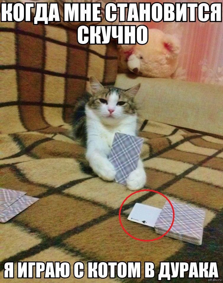 Играть в карты в кота казино максбет слотс казино обзор