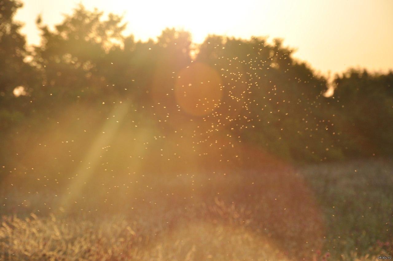 того, картинки солнечная пыль столешница