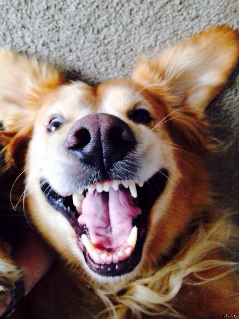 улыбающаяся собака фото именно этот