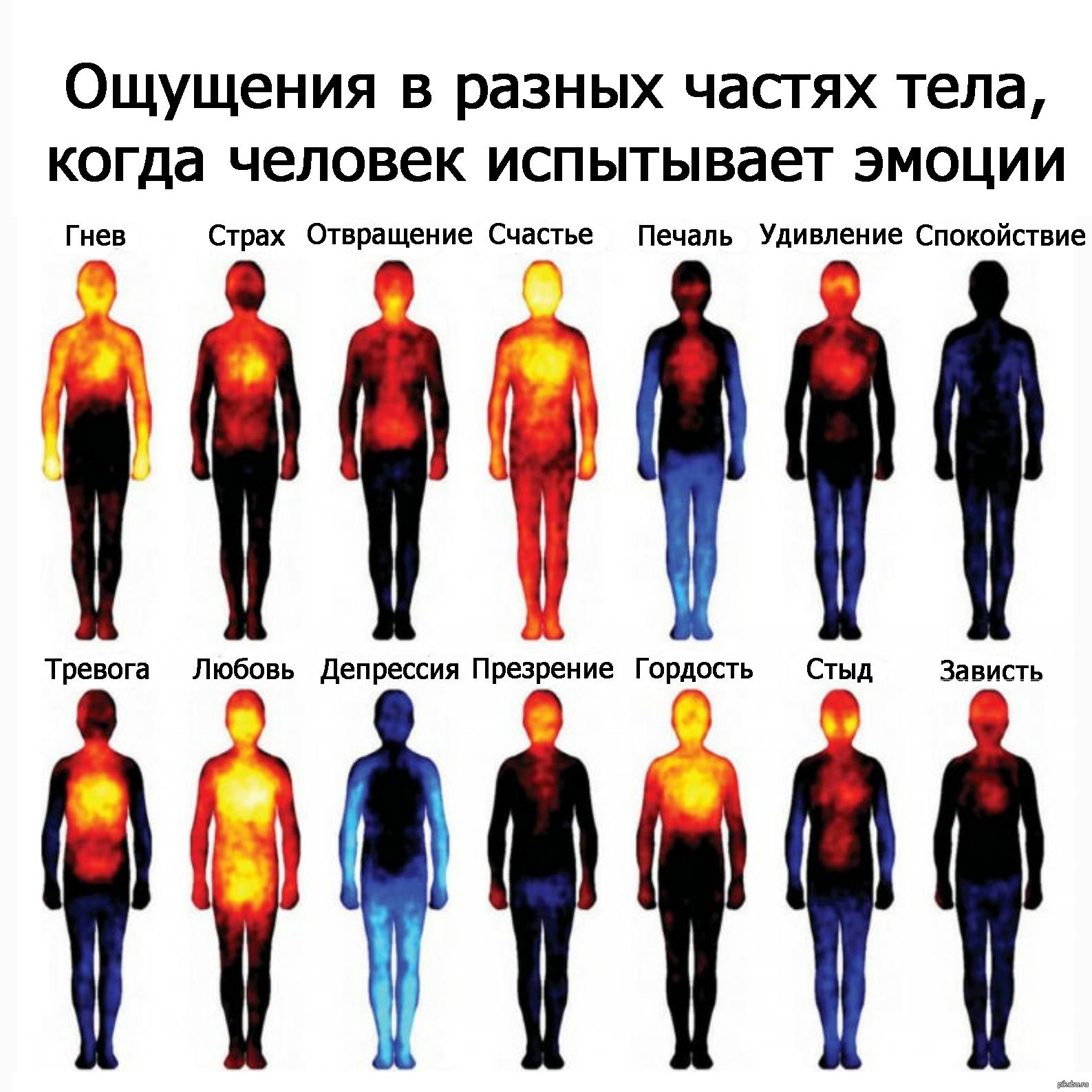 Картинки где живут эмоции