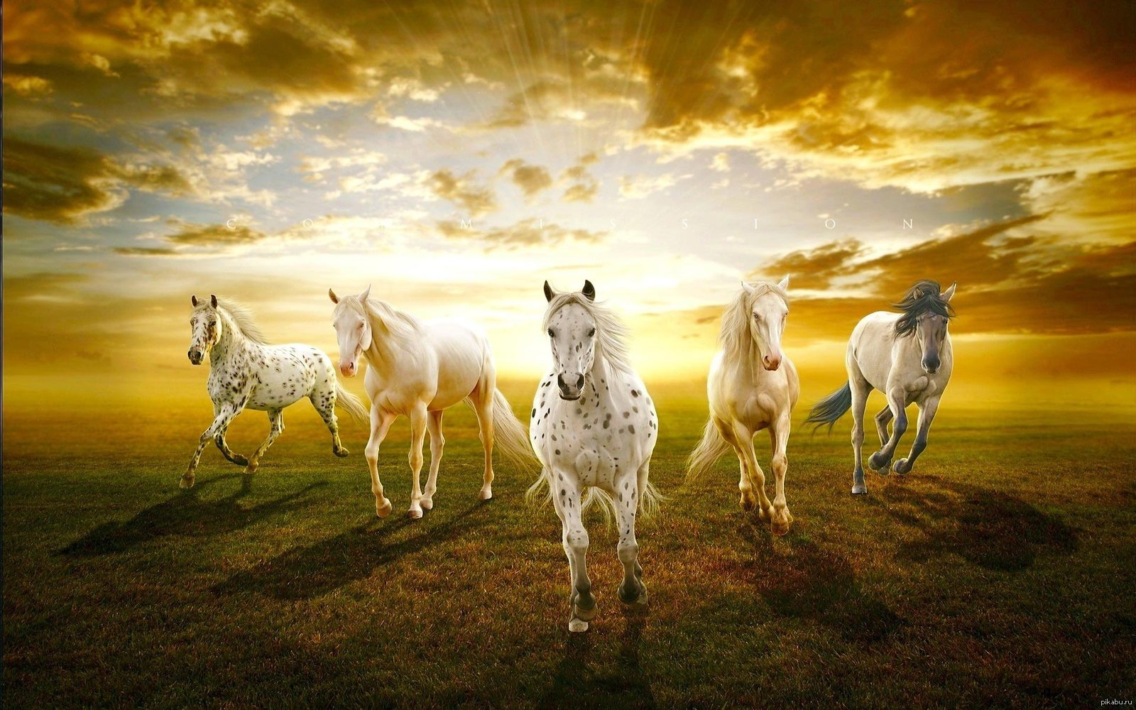 horses ins names released - HD1920×1080