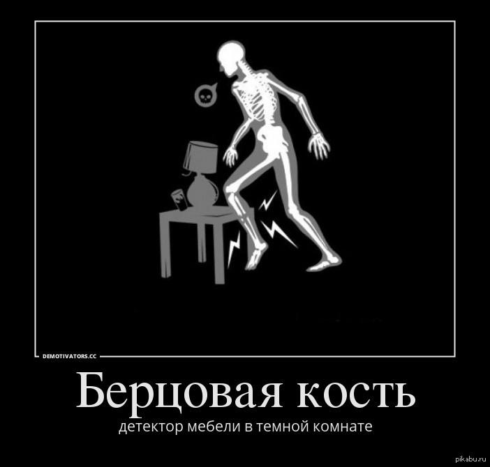 фото кости берцовой